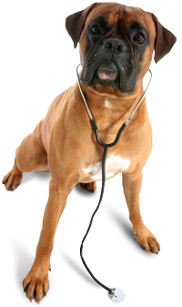 image of dog wearing a stethescope